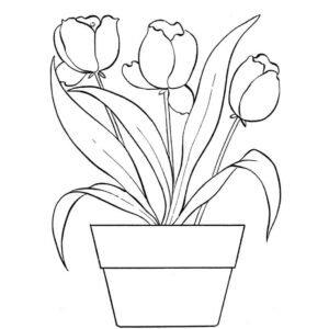 Maceta tulipanes